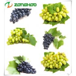 一级冷轧葡萄籽油    健康食用油脂  质量保证
