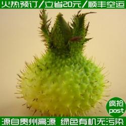 【火热预订】基地自产 贵州高原新鲜特级优特 刺梨鲜果 批发团购