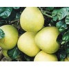 柚皮苷98% 柚皮苷厂家  柚皮苷价格